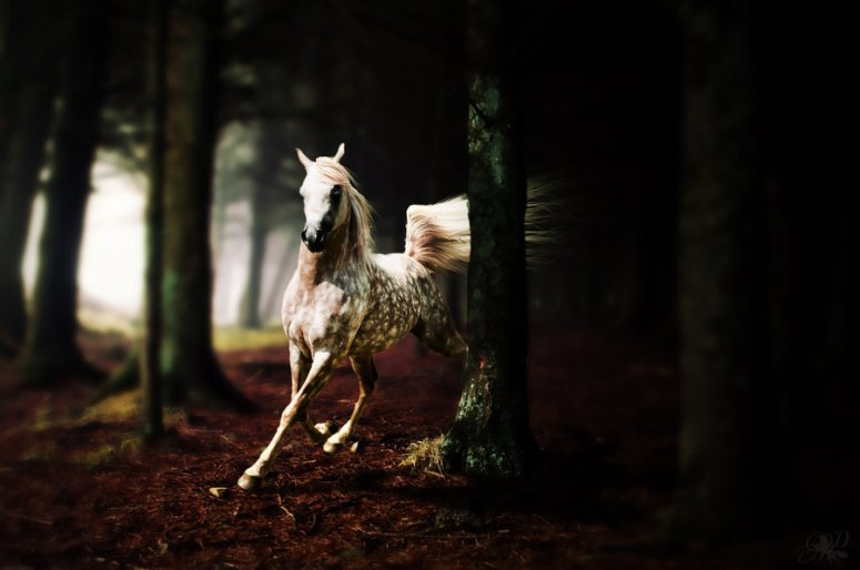 running_through_the_woods_by_darkhorses90-d4h8ywn