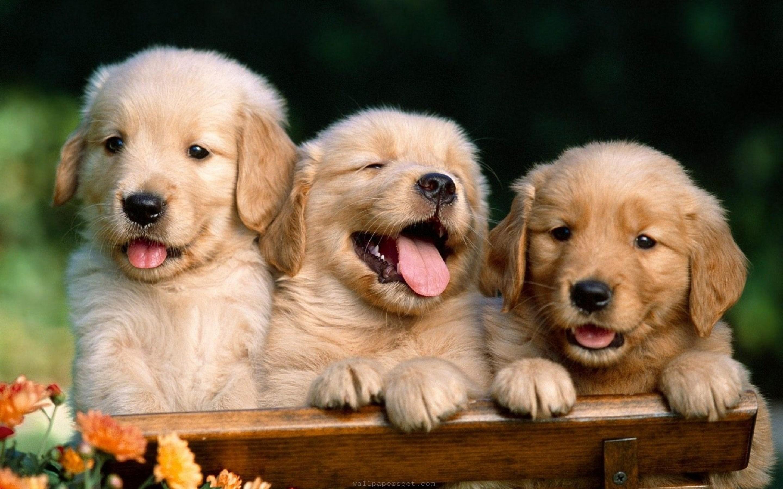 cute-dog-widescreen-high-definition-wallpaper-desktop-background-dog-free-images