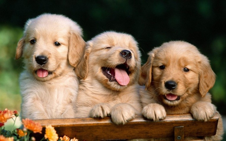 cute-dog-widescreen-high-definition-wallpaper-desktop-background-dog-free-images